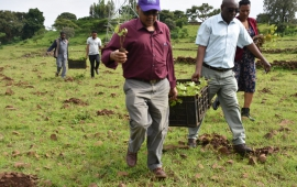 ORDA to plant over 8.4 million tree seedlings in 2019